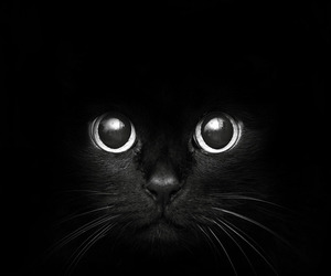 black, kitty, and cat image
