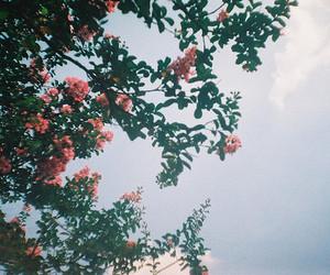 flowers, tree, and sky image