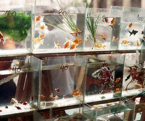 fish, aquarium, and animal image