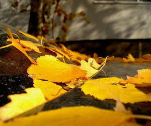 alone, autumn, and leaves image