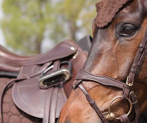 horse, beautiful, and equestrian image