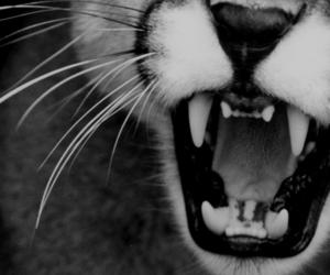 animal and teeth image