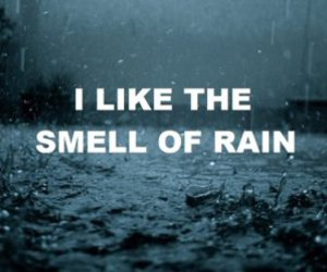 drops, rain, and smell image