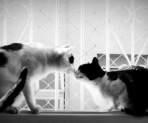cat and kiss image