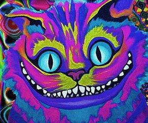 cat, alice in wonderland, and wonderland image