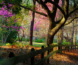 nature, trees, and flowers image