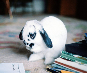 animal, rabbit, and photography image