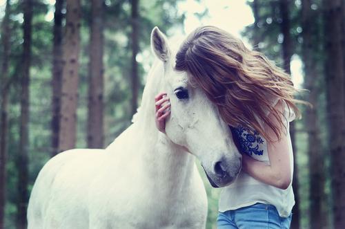 ♘ საინტერესო ფაქტები ცხენებზე ♞