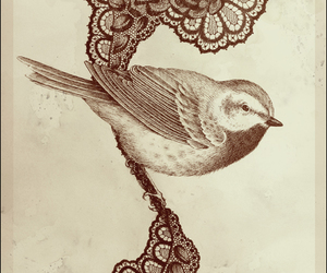 bird and illustration image