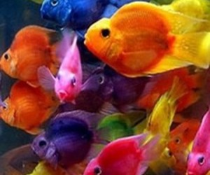 fish, colorful, and rainbow image