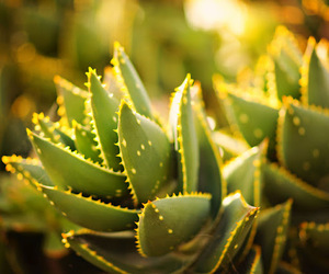 catus and sun. summer image