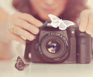 camera, butterfly, and photography image