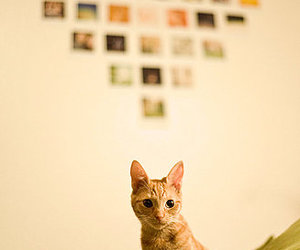 cat, camera, and heart image