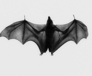 bat and black and white image