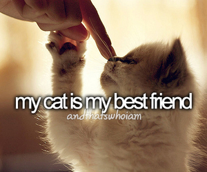 about me, best friend, and cat image