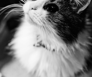 animal, b&w, and black image