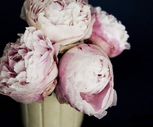 peonies and lovely. image