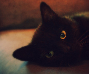 black cat, cute, and eyes image