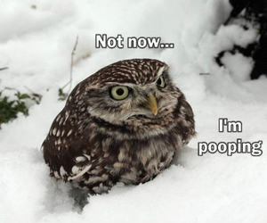 owl, funny, and pooping image