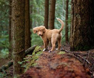 adorable, brown, and pine image