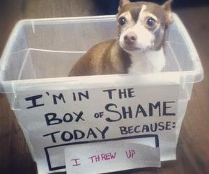 funny, box, and dog image