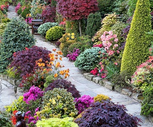 garden, pink, and summer image