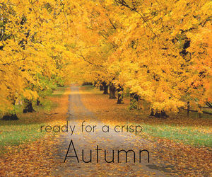 autumn, yellow, and fall image