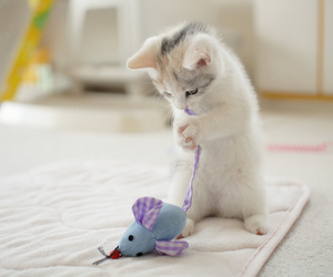 cat, cute, and mouse image