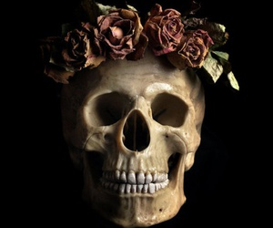 rose, skull, and awesome image