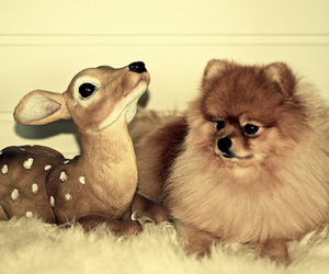 baby, dog, and fluffy image