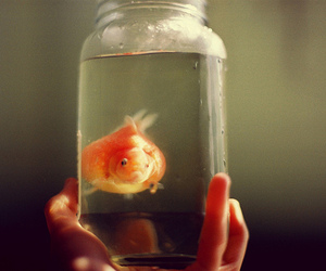 fish, water, and goldfish image