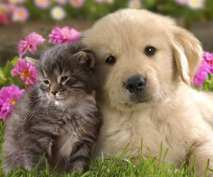 adorable, awww, and pretty image