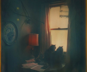 cat, window, and room image