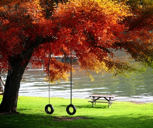 autumn, swing, and tree image