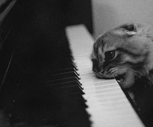 cat, piano, and black and white image