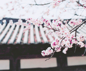 asia, flowers, and japon image