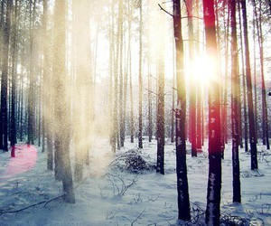 snow, photography, and trees image