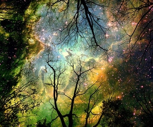 tree, stars, and sky image