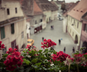 flowers, red, and road image