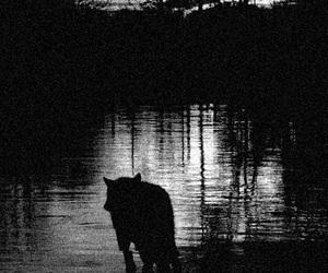 nature, wolf, and animal image