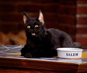 cat, salem, and sabrina the teenage witch image