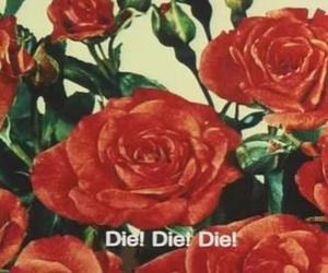 die, rose, and flowers image