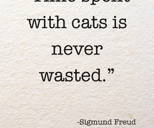 cat, sigmund freud, and time image