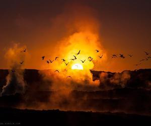 birds, sun, and sunset image