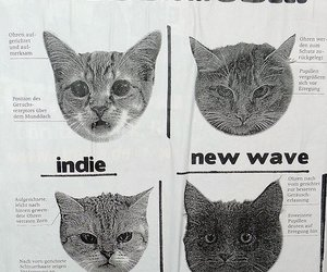 cat, indie, and punk image