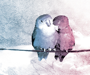 birds, couple, and cute image