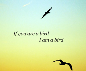 bird, blue, and fly image