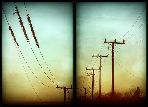 birds and electricity image