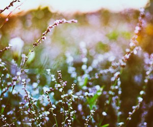 flowers, pretty, and sun image