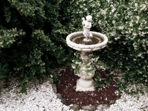birdbath and garden image